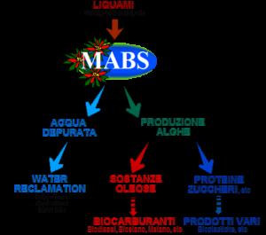 schemasemplificato Mabs